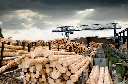 lumber industry urethane gear